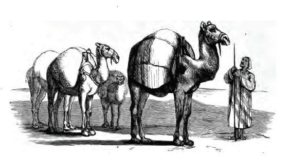 El arabe y el camello. fabula de esopo