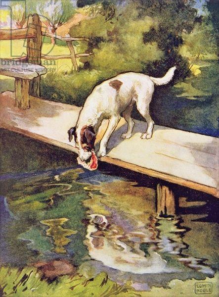 El perro y la sombra fabula esopo