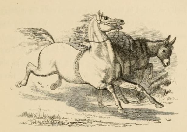 el asno cargador y el caballo fabula