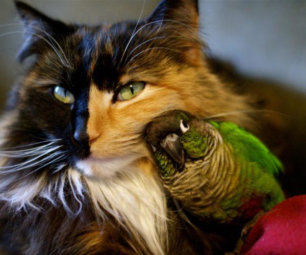 el gato y los 2 pajaros